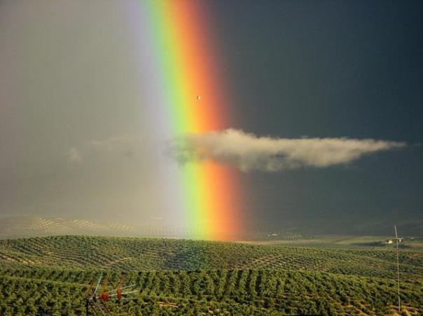 the-best-rainbow-10
